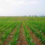 زمین کشاورزی - عصر جنوب